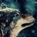Okładka Wolves