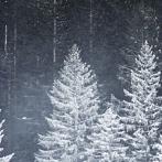 Okładka Zima ☆