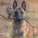 Okładka Zwierzęta