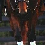Okładka Konie <3