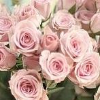 Okładka O zapachu kwiatów...