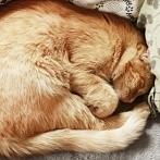 Okładka Tytus- mój kot :)