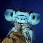 Okładka DRAGONFLIES - MY LOVE.!! <3