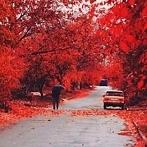 Okładka Seasons