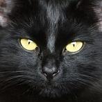 Okładka Koty - color