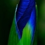 Okładka Green & Blue