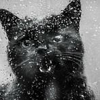 Okładka czarno białe fotografie