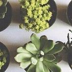 Okładka Ogród i kwiaty