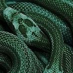 Okładka Paleta: Zielony