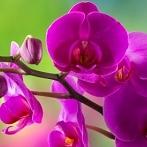 Okładka Kwiatki, bratki i stokrotki