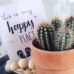Okładka Kaktusy i inna zielenina