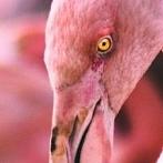 Okładka ptaki egzotyczne