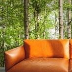 Okładka Fototapeta las