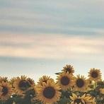 Okładka Promyki słońca