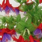 Okładka Kwiaty z pończoch