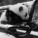 Okładka Panda <3