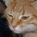 Okładka koty