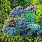 Okładka Fantazyjny ogród