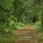 Okładka Bory i lasy