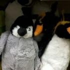 pingwinke
