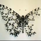 motylowata