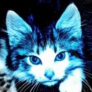 bluecat14