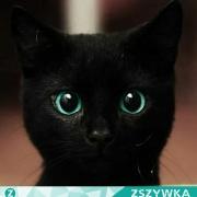 Koteczek23
