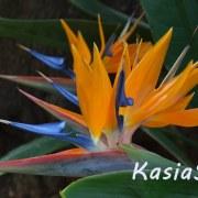 KasiaSzy