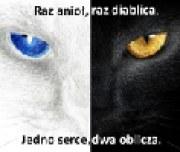 olica2001