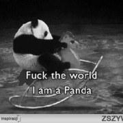 katy_panda_