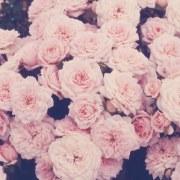 rozaos
