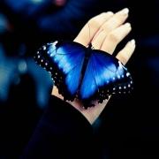 BlueButterfly997