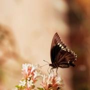 motylowa087