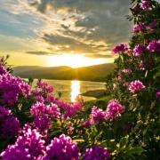 kochamkwiaty123