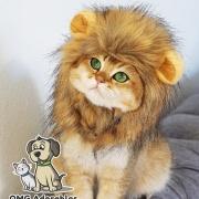 lionqueen0207